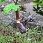 Bobři ohlodávají strom u jezírka