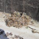Opuštěné hnízdo za vletovým otvorem po odkrytí