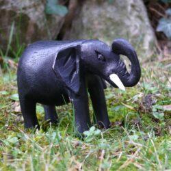 Slon z Konga