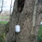Geocache v dutině stromu